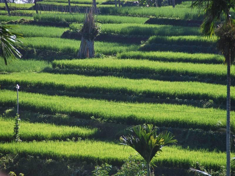 Fietsen op Lombok | Rama Tours