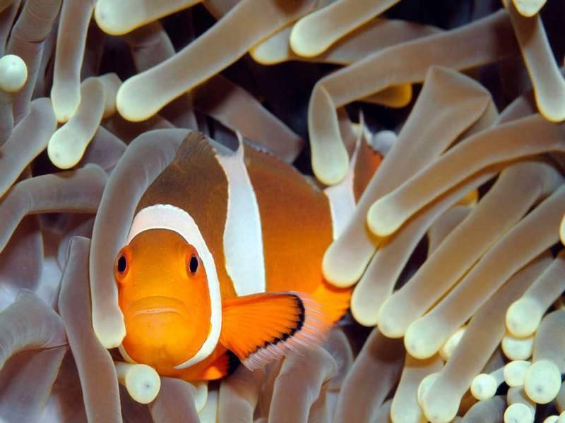De Gili eilanden (zuidwesten) | Rama Tours