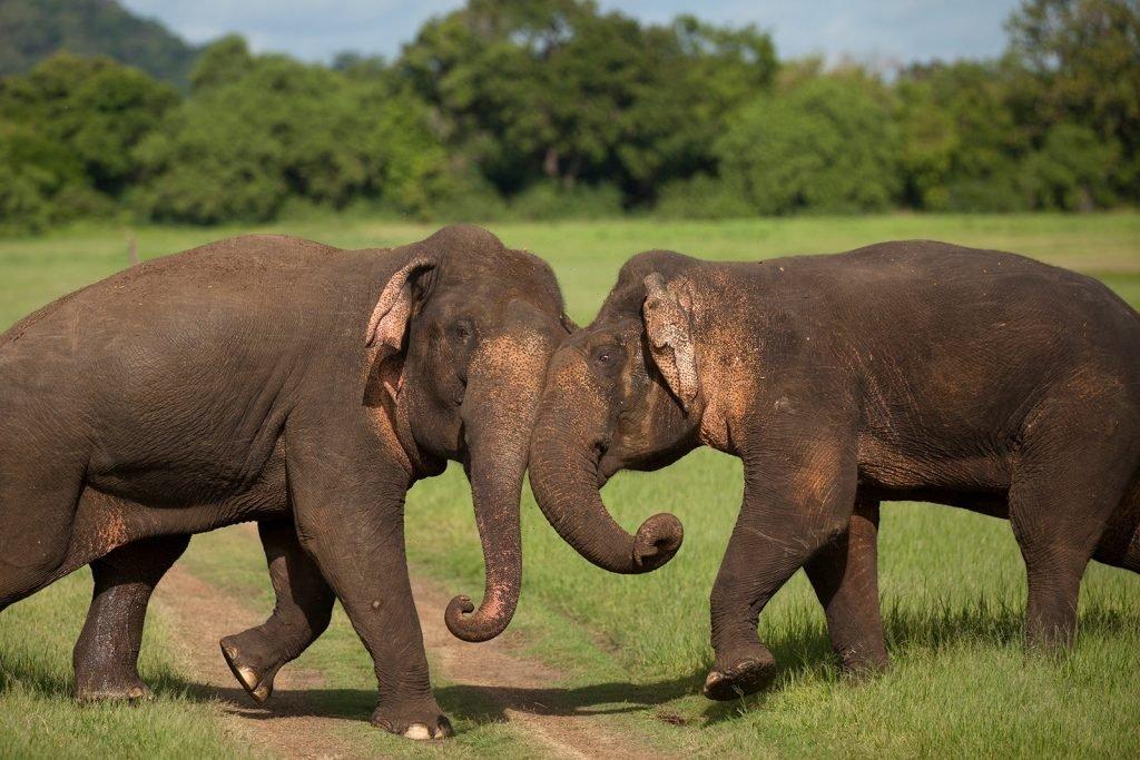 Familiereis Sri Lanka | Rama Tours