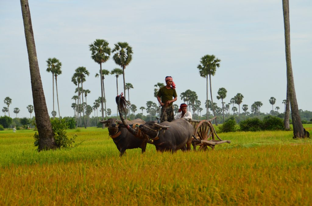 Karakteristiek Cambodja | Rama Tours