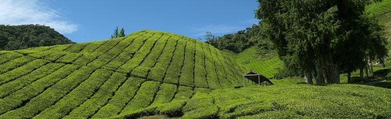 West-Maleisië Hoogtepunten | Rama Tours