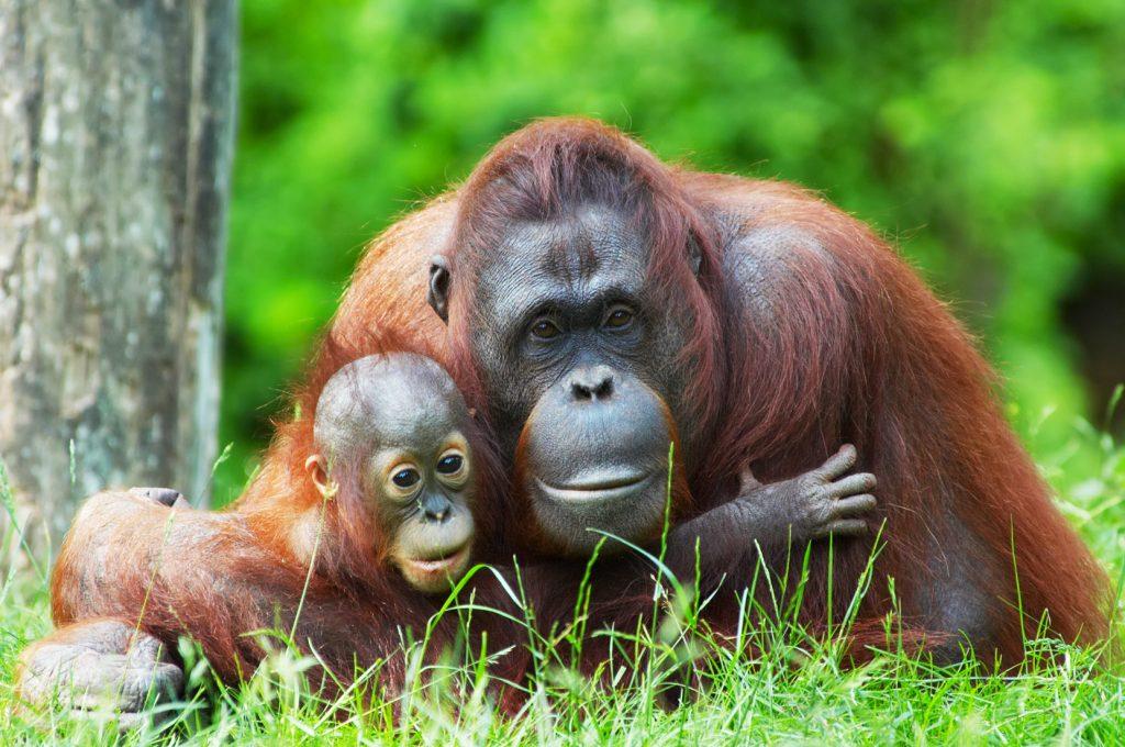 Sumatra, Java en Bali compleet | Rama Tours