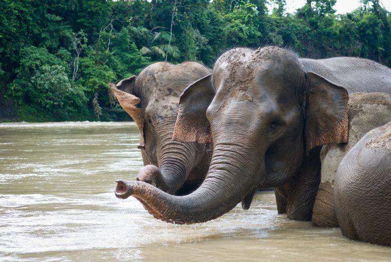 Avontuurlijk Sumatra   Rama Tours
