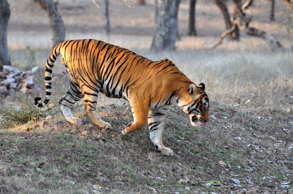 Wildlife in India   Rama Tours