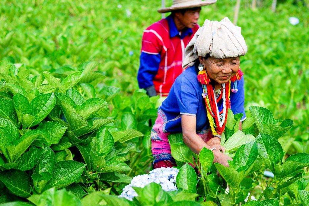 Thailand, Land van de Eeuwige Glimlach | Rama Tours