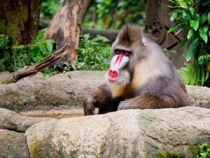 Singapore Zoo | Rama Tours
