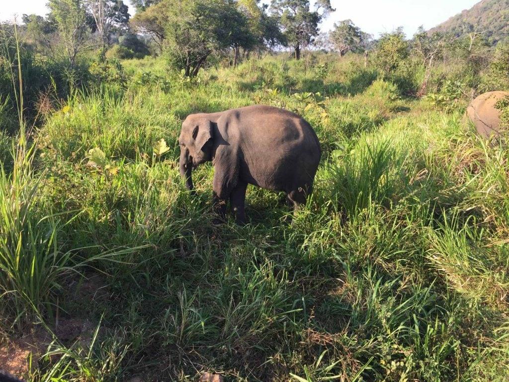 Minneriya National Park | Rama Tours
