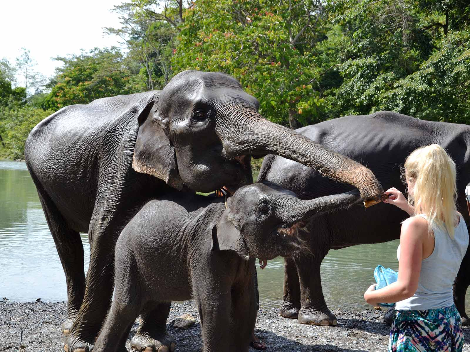 tips duurzaam toerisme olifanten wassen irene op sumatra